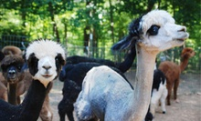 Farm Tour and Picnic Lunch for a Child or Adult at Happy Hills Alpaca Farm (Half Off)