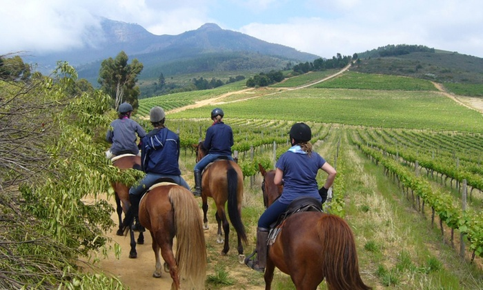 Alpha Equestrian - Western Cape: Two-Hour Outride and Wine Tasting at Alpha Equestrian
