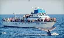 Gray-Whale-Watching Tour for an Adult or Child with Optional Book from Dana Wharf Whale Watching (Up to 61% Off)