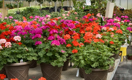 $15 for $30 Worth of Flowers and Plants at Upriver Greenhouse Florist and Nursery