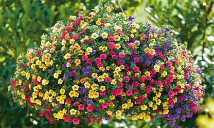 $18 for $30 Worth of Plants and Flowers at Foertmeyer & Sons Greenhouse Co.