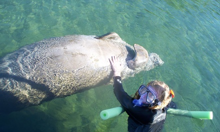 $175 for a Four-Hour Private Manatee Tour for Up to Six at Nature Coast Manatee Tours (Up to $350 Value)