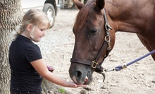 $275 for a One-Week Horseback-Riding Camp Including Lessons and Trail Rides at Dead Broke Farm ($500 Value)