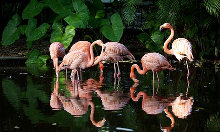 Everglades Wonder Gardens Visit for Family of Four, Two Adults, or One Adult and One Child (Up to 50% Off)