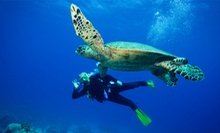$287 for Open Water Diver Certification Course from Eco Dive Center ($595 Value)