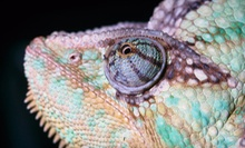$7 for a Reptile-Zoo Visit at Reptilia (Up to $15 Value)