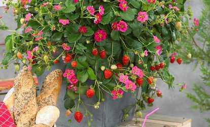 Maison et jardin offres coupons groupon - Plantes et jardins code promo ...