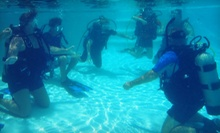 Discover Scuba Class for One or Two at The Dive Station (Up to 52% Off)
