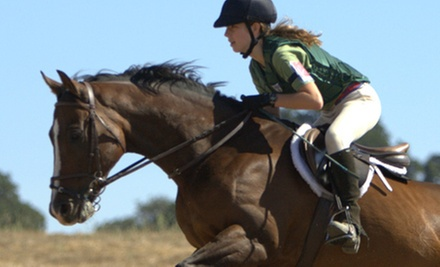 Introductory Horse-Riding Lesson with One, Five, or Eight Flat Lessons at Pickering Equestrians in Parker (Up to 59% Off)