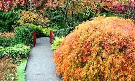$20 for $40Worth of Japanese Maples, or Ginkgo at Conifer Kingdom