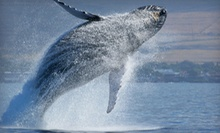 Whale Watching Cruise for Two or Four from Odyssey Whale Watch (Up to 48% Off)