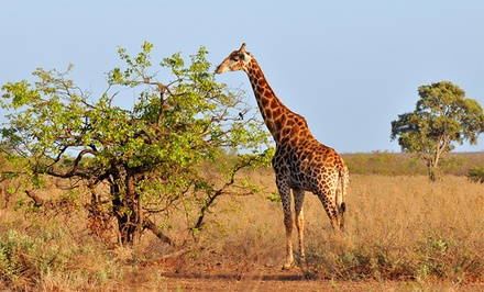 groupon daily deal - ✈ 9-Day South Africa Safari with Airfare and Game Drives from smarTours. Price/Person Based on Double Occupancy.