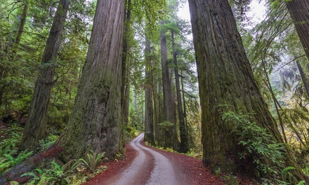 $20 for State Capital or Pony Express Walking Tour at Sequoia Nature & Science Adventures ($40 Value)