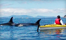 San Juan Island Kayaking Tour for One, Two, or Four from Crystal Seas Kayaking (Up to 53% Off)