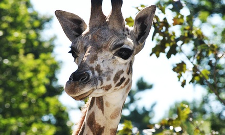 Single-Day Admission for One Person or Family to Bowmanville Zoo (Up to 52% Off)