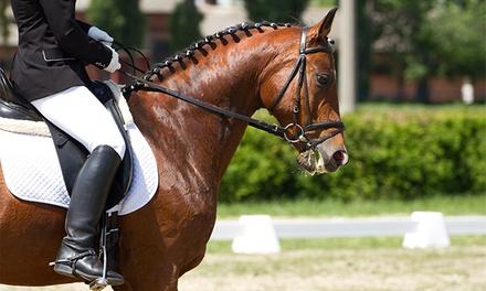 Coudelaria Quinta Oliveira — Póvoa de Varzim: 1 ou 3 meses de aulas de equitação desde 39€
