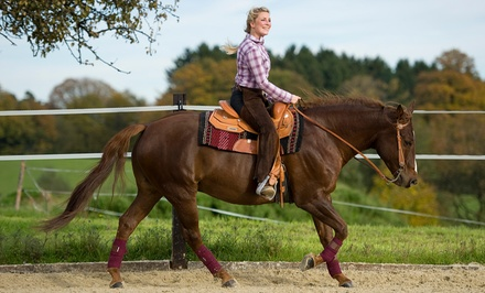 Two or Four 60-Minute Horseback-Riding Lessons at Amethyst Performance Horses (Up to 48% Off)