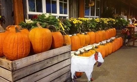 Corn Maze and Harvest Festival Activities for One or Two at Gramma's Farm Store (Up to 50% Off)