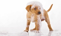 GROUPON: Up to 60% Off Self-Serve Dog Washing at Pet Valu Pet Valu