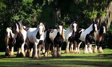 Horse-Farm Walking Tour for One, Two, or Four at The Gypsy Gold Farm (Up to 56% Off)