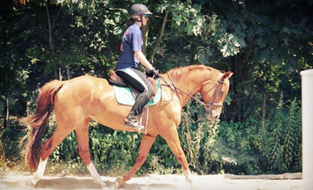 One or Four 60-Minute Private Horseback-Riding Lessons at Gaston Farm Inc. (Up to 60% Off)