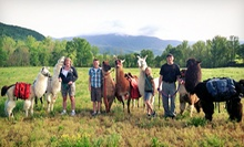 Llama Trail Trek and Farm Visit for Two, or Farm Visit for Two or Four from Smoky Mountain Llama Treks (Half Off)