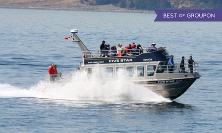$63 for a Three-Hour Wildlife/Whale Watching Tour from Five Star Whale Watching Ltd. ($105 Value)