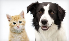 Feline or Canine Exam and Health Plan or Microchip for One or Two Pets at Pet Vet Animal Hospital (Up to 60% Off)