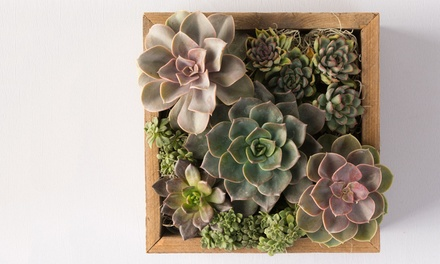 Succulent Plants in Reclaimed Wood Containers