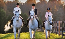 6 or 10 30-Minute Horseback-Riding Lessons at Fairview Farms LLC (Half Off)