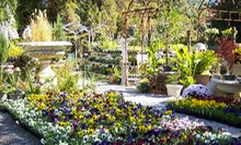 $12 for $24 Worth of Flowers, Shrubbery, and Garden Accessories at Southern Vistas Landscape &amp; Garden Center