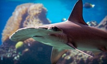 Visit for Two or Four or Kids' Birthday Party for Up to 10 at Portland Aquarium (Up to 47% Off). Four Options Available.