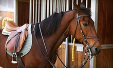 $150 for One Week of Kids' Horse Camp at East Cobb Stables ($350 Value)