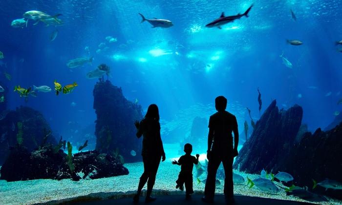 Ushaka Marine World - Durban: Combo Ticket to uShaka Marine World