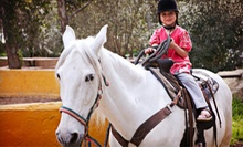 One Group Riding Lesson for Two, Two Private Lessons for One, or a Pony Party at Magistaad Stables (Up to 60% Off)