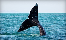 $45 for a Blue-Whale-Watching Cruise for Two from Harbor Breeze Cruises in Long Beach (Up to $100 Value)