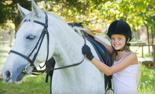 Horseback-Riding Lessons for Two or Four at New Traditions Riding Academy (Up to 58% Off)