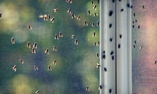 $69 for a Pest-Control Treatment with a Termite Inspection from The Bug Doctor ($189 Value)
