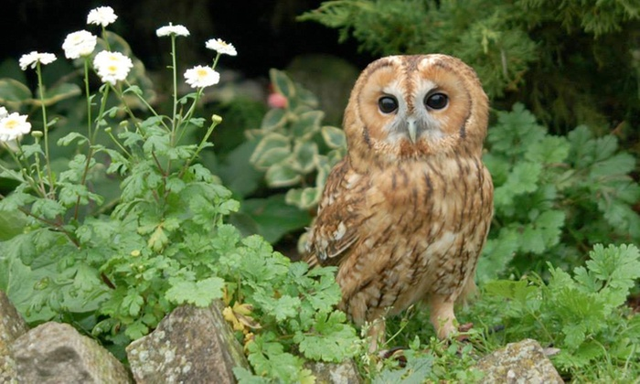 The Raptor Foundation - Huntingdon: The Raptor Foundation: Family Membership With Free Entry For One Year £12 (50% Off)