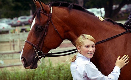Family Tour, Private Riding Lesson for One, or Youth Summer Camp Day at Schauber Stables, LLC (Half Off)