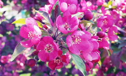 $20 for $40 Worth of Perennials, Shrubs, and Grasses at Miller Nursery in Johnston