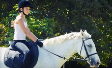 One, Three, or Five 60-Minute Group Horseback-Riding Lessons at Talbot Run Equestrian Center, LLC (Up to 56% Off)