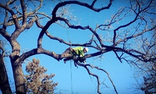 $99 for $250 Toward Tree Removal, Pruning, Stump Grinding, and Brush Chipping from Hayden's Ridge Tree Service