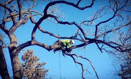 $99 for $250 Toward Tree Removal, Pruning, Stump Grinding, and Brush Chipping from Hayden&#x27;s Ridge Tree Service