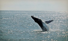 Whale or Dolphin Watching from Cape May Whale Watch &amp; Research Center (Up to 54% Off). Four Options Available.