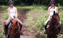 One Beginner or Two Advanced Horseback-Riding Lessons at Deer Creek Stables (Up to 62% Off)