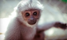 Admission for Two or Four or Private Tour for Up to 10 to Gibbon Conservation Center (Up to 53% Off)