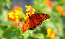 Visit for Up to Four People or an Individual or Family Season Pass to The Butterfly Zoo (Up to 72% Off)