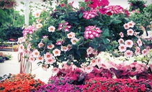 $15 for $30 Worth of Plants, Gardening Supplies, and Home Décor at Under the Sun Garden Center