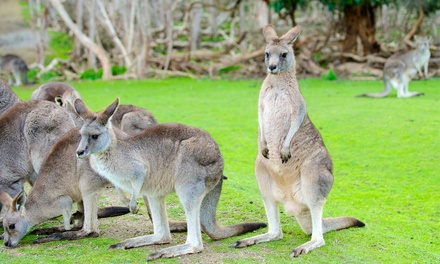 Two or Four Admissions to Kentucky Down Under Adventure Zoo (Up to 43% Off)